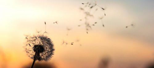 Cómo crear abundancia